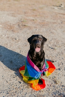 Cane labrador nero divertente carino con una bandiera gay arcobaleno colorato.
