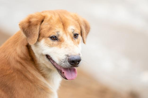 Cane marrone che si siede vicino al fiume