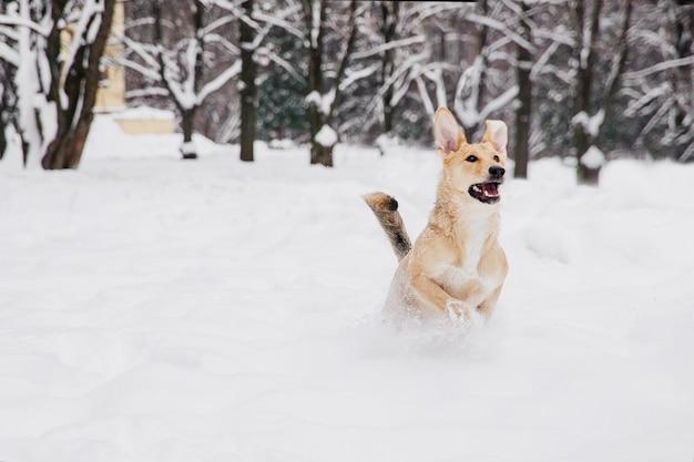 Cane marrone chiaro che funziona sulla neve in una foresta. cane giocoso