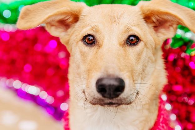 Cane marrone chiaro che si siede sul fondo decorativo rosa