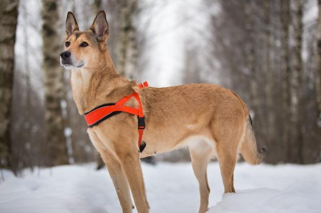 Cane misto sveglio della razza che cammina in un parco. ibrido nella neve