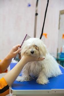 Cane nel salone di toelettatura
