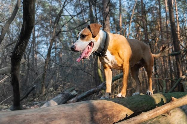 Cane nella foresta che sta su un ceppo. colpo di un cane della razza mista ad una passeggiata della foresta alla luce solare diretta