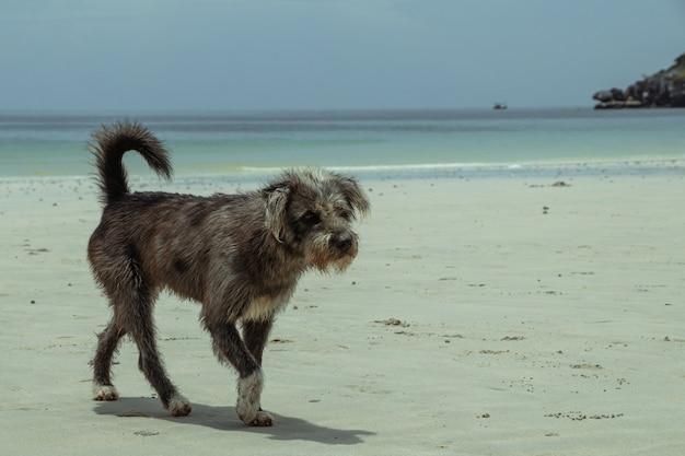Cane nero che cammina in spiaggia.