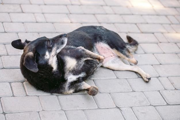 Cane paralizzato senza tre zampe sdraiato sulla strada,