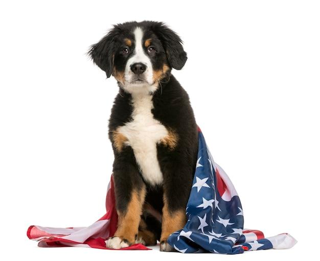 Cane patriottico che si siede con la bandiera americana
