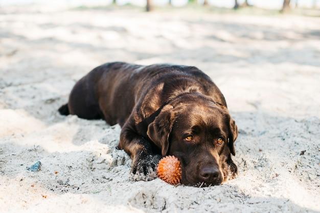 Cane rilassante in spiaggia