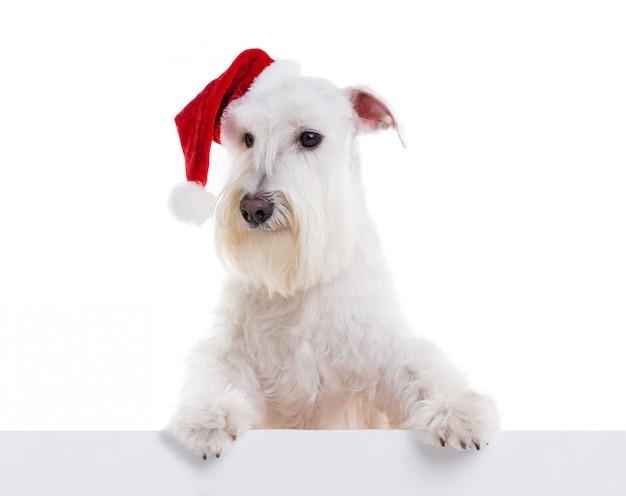 Cane santa su bianco nell'isolato dello studio