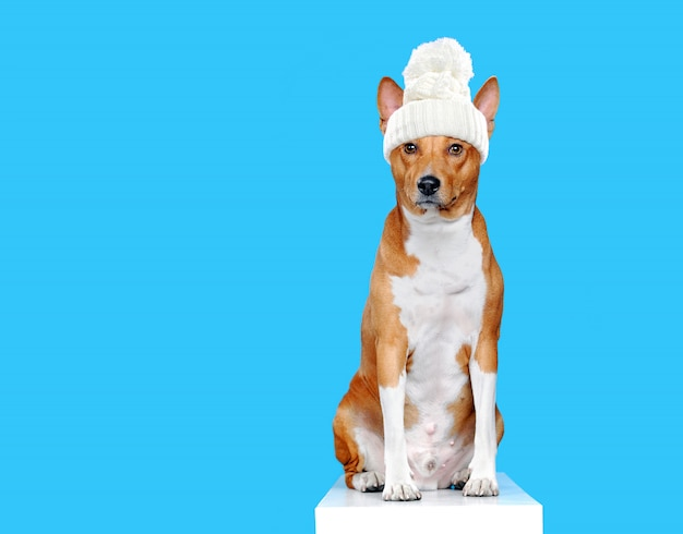 Cane seduto che indossa sciarpa e cappello lavorato a maglia bianchi