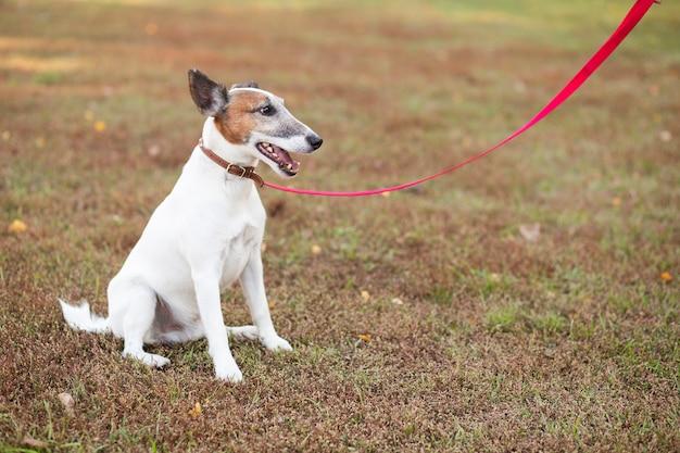 Cane seduto nel parco con guinzaglio