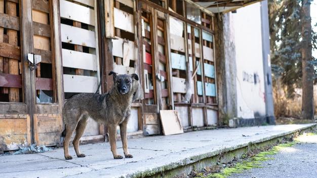 Cane senza casa vicino a un edificio abbandonato