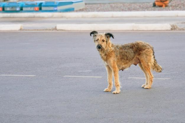 Cane senza casa.