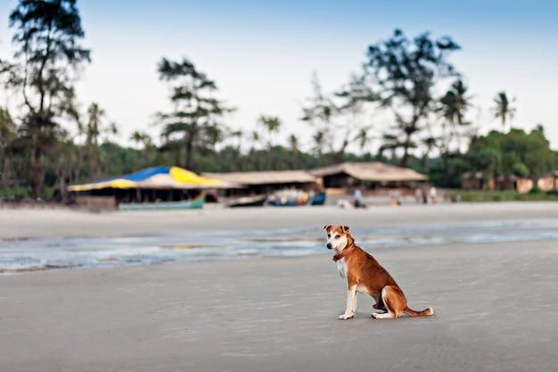 Cane senza casa