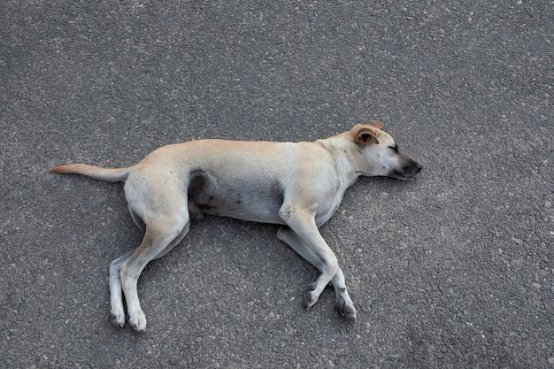 Cane senza tetto addormentato che si trova sulla terra dell'asfalto