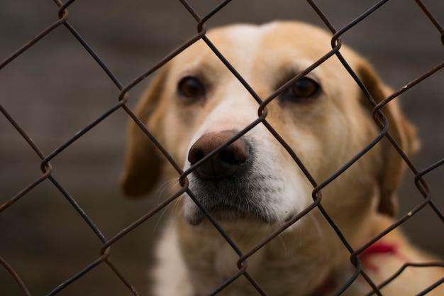 Cane solitario in gabbia