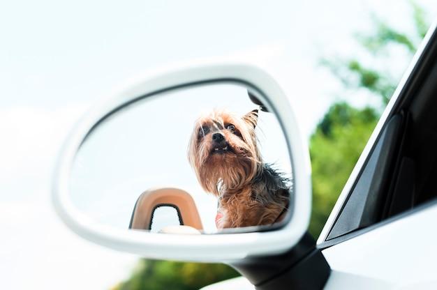 Cane su un primo piano di viaggio stradale