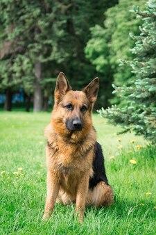 Cane sull'erba