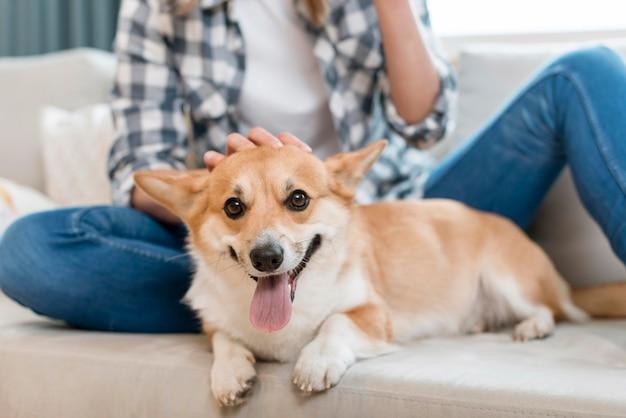 Cane sveglio che è animale domestico dalla donna sul divano