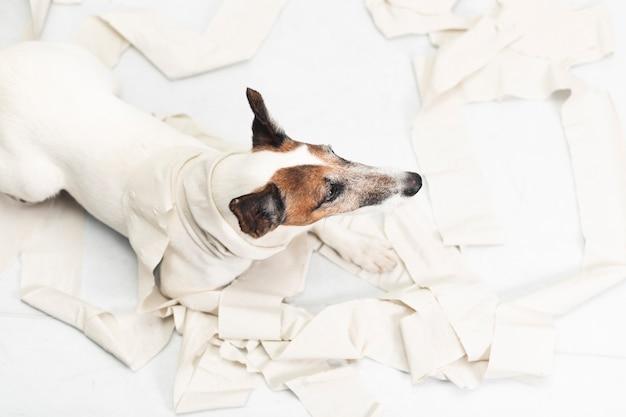 Cane sveglio che fa pasticcio con la carta di rotolamento