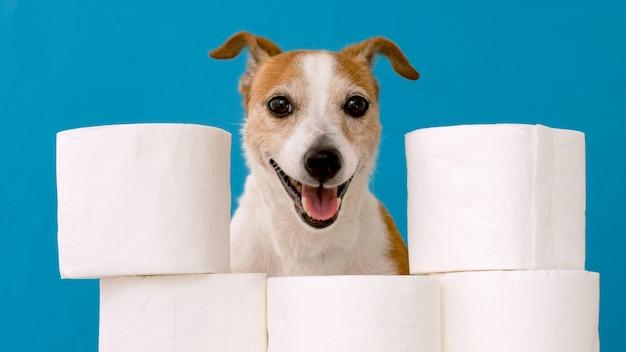Cane sveglio che si siede con i rotoli di carta igienica