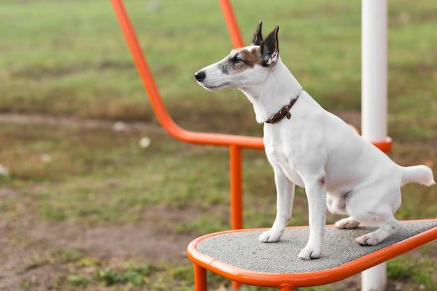 Cane sveglio che si siede nel parco dei bambini