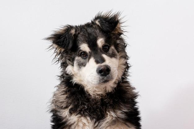 Cane sveglio dell'angolo alto su fondo bianco