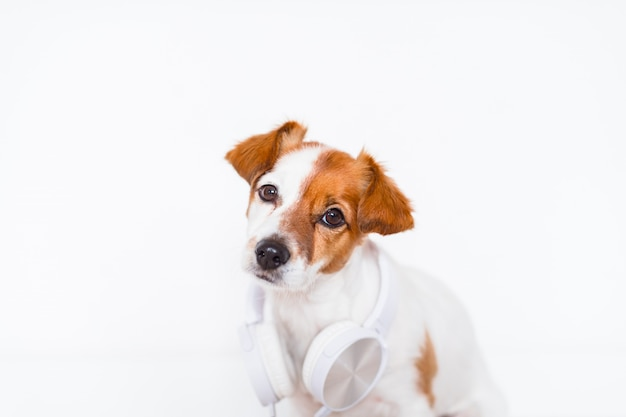 Cane sveglio di jack russell che ascolta la musica sulla cuffia avricolare a casa
