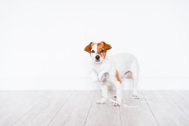 Ladies Jack Russell Terrier Dog sciarpa regalo bello qualità