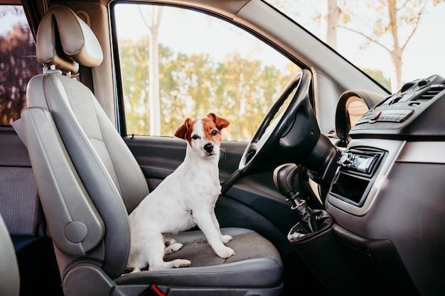 Cane sveglio di jack russell che si rilassa in un furgone. concetto di viaggio