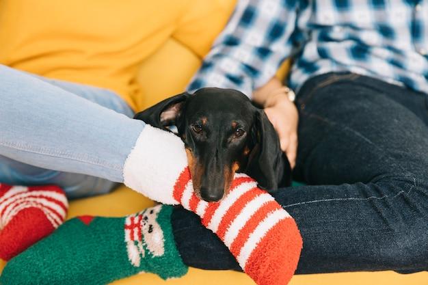 Cane tra coppia che indossa calzini di natale