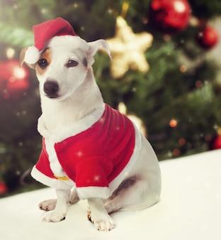 Cane vestito da babbo natale in tema natalizio