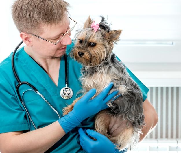 Cane veterinario della tenuta sulle mani alla clinica del veterinario