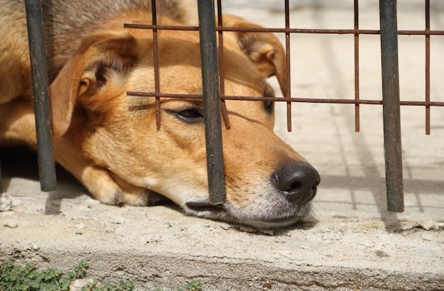Cane vittima di abusi sugli animali