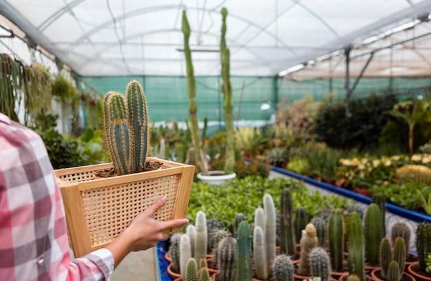 Canestro della tenuta della donna del primo piano con il cactus