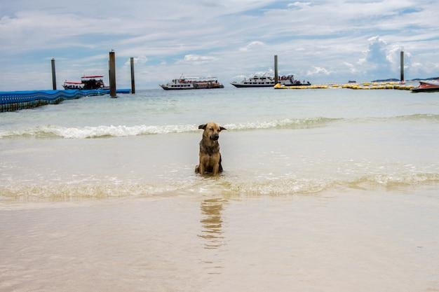 Cani che giocano acqua di mare con aria calda