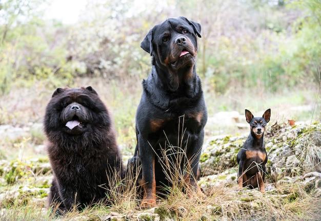 Cani in natura