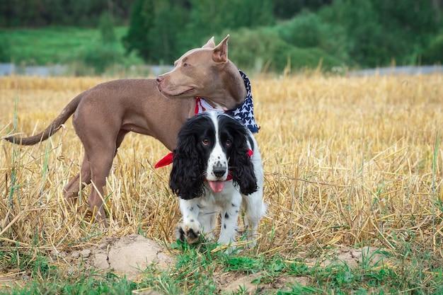 Cani in un pagliaio