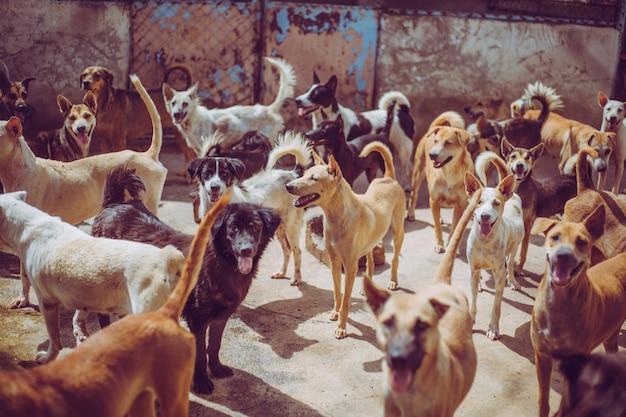 Cani randagi. i cani randagi abbandonati senzatetto giacciono nelle fondamenta.