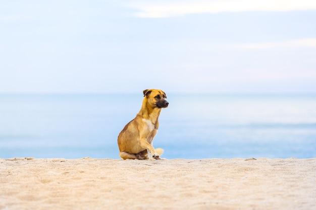 Cani sulla spiaggia al mattino. fuoco molle