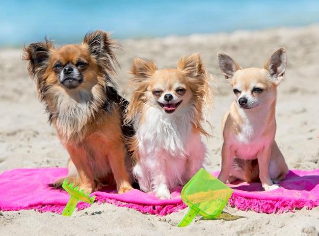 Cani sulla spiaggia