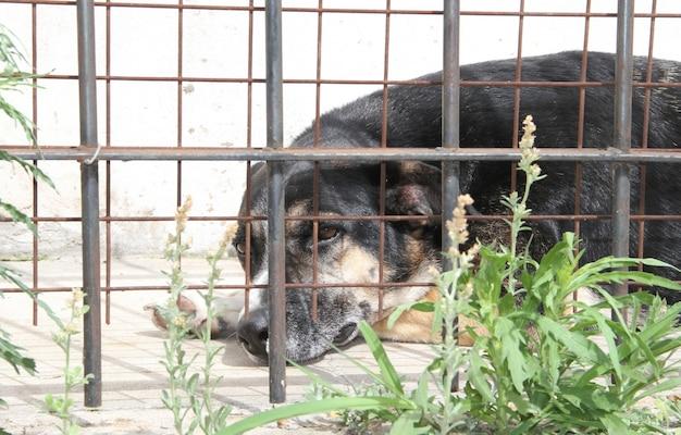 Cani vittime di abusi sugli animali