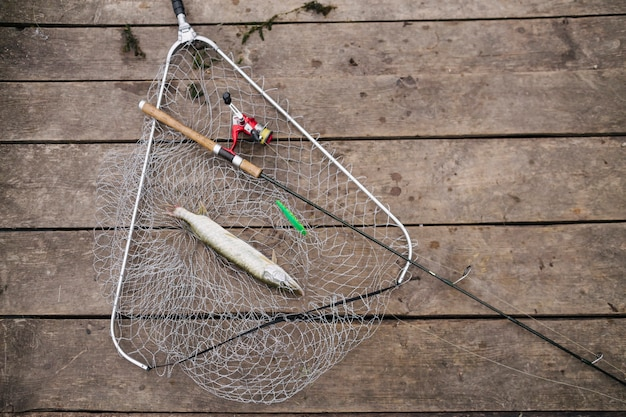 Canna da pesca e pesce d'acqua dolce nella rete da pesca