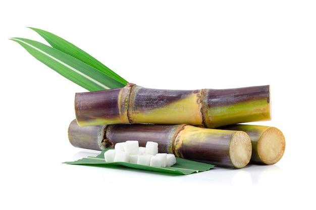 Canna da zucchero isolata su bianco