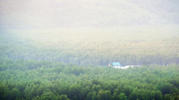 Capanna di legno nella foresta