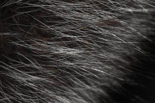 Capelli dal primo piano della pelliccia animale