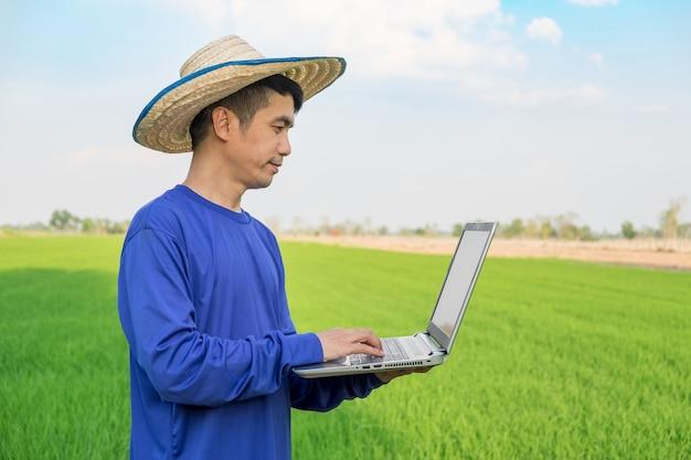 Cappello di usura dell'uomo dell'agricoltore facendo uso del computer portatile che sta sul giacimento verde del riso