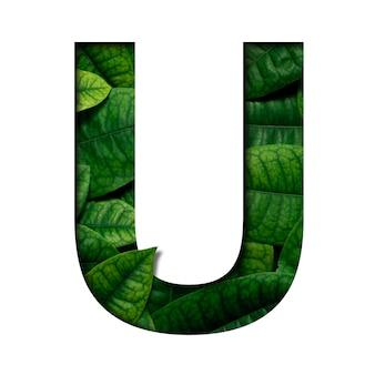 Carattere di foglie u fatto di foglie vive reali con carta preziosa a forma di carattere tagliata. carattere di foglie.