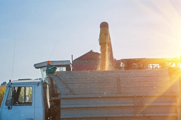 Caricamento di semi di mais dopo la raccolta