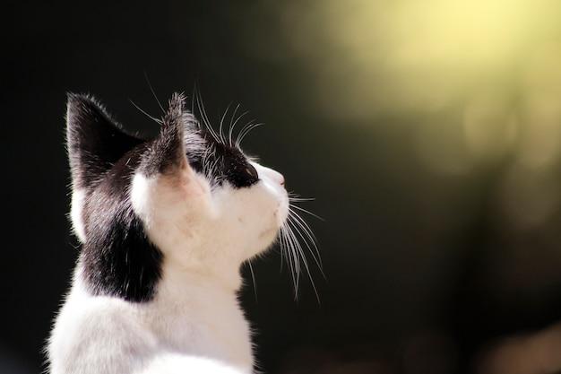 Carino gattino da dietro, alzò lo sguardo