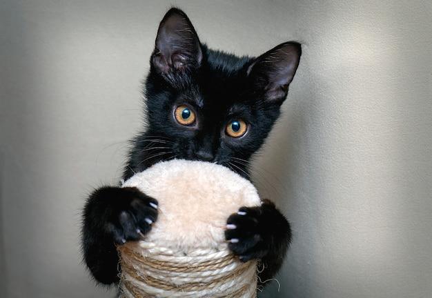 Carino gattino nero davanti alla telecamera